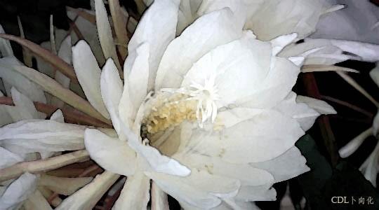 tanhua05